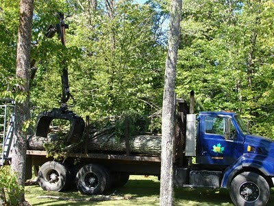 Crews haul away the tall dead white pine that stood sentry over our land long before it was our land.