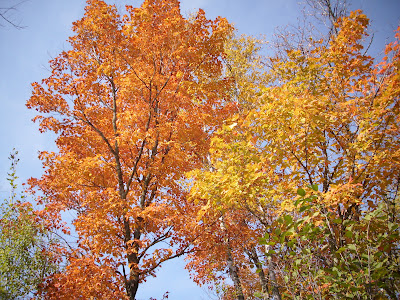 Northern Minnesota is approaching peak fall colors. Find out more about where to find the fine foliage.