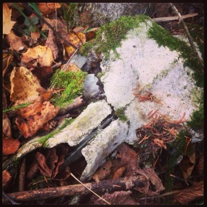 Moss on a moose skull