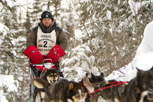 Curt Perano of Queensland, NZ heads north out of the Sawbill checkpoint near Tofte, MN with his team of sled dogs during the marathon distance running of the 2011 Beargrease Sled Dog Marathon. The Beargrease is a sled dog race run every year in northern Minnesota from Duluth to nearly the Canadian border. The marathon distance event, 373 miles in length, is a qualifier for the famous Iditarod, run in Alaska.