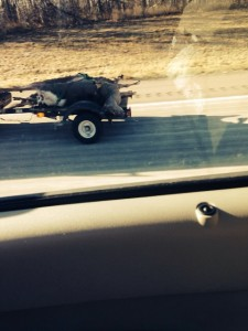 Dead deer on I-35