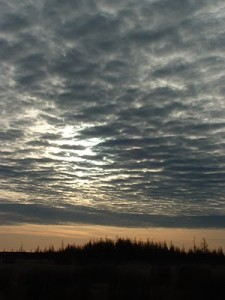 Sax-Zim Bog at daybreak