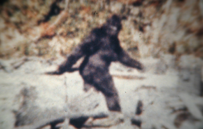 The iconic film footage of Sasquatch reveals the myth, if not the facts of this purported ape man of North America.