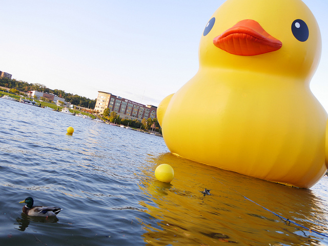 This giant rubber duck was in Pittsburgh in 2013. (PHOTO: Mark Dixon, Flickr Creative Commons).