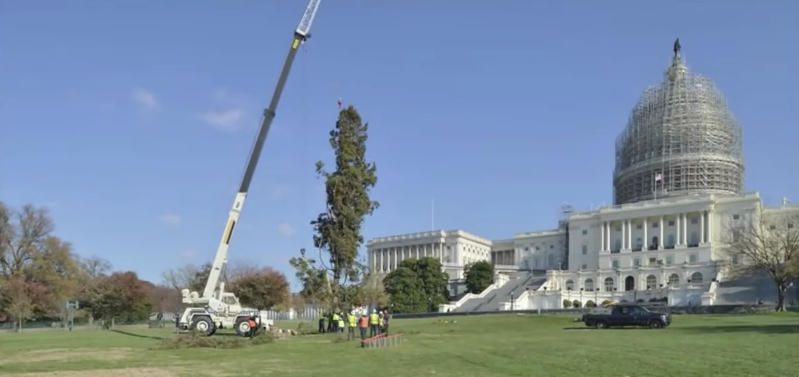 The U.S. Capitol Christmas Tree 2014 came from the Chippewa National Forest in Northern Minnesota. (Screen shot from Architect of the Capitol video)