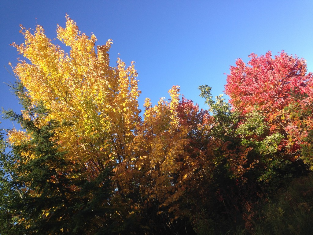 Fall colors come early, but never disappoint in Itasca County, Minnesota.