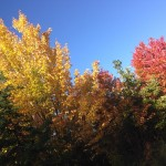 Find Northern Minnesota fall colors