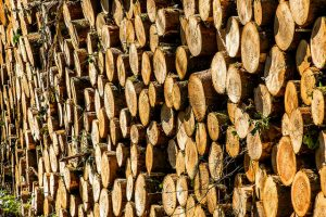 State luring wood product plant to Northern MN