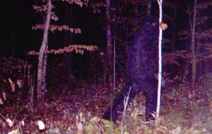 The now famous trail cam photo that kicked off speculation about Sasquatch in the Remer, Minnesota area.