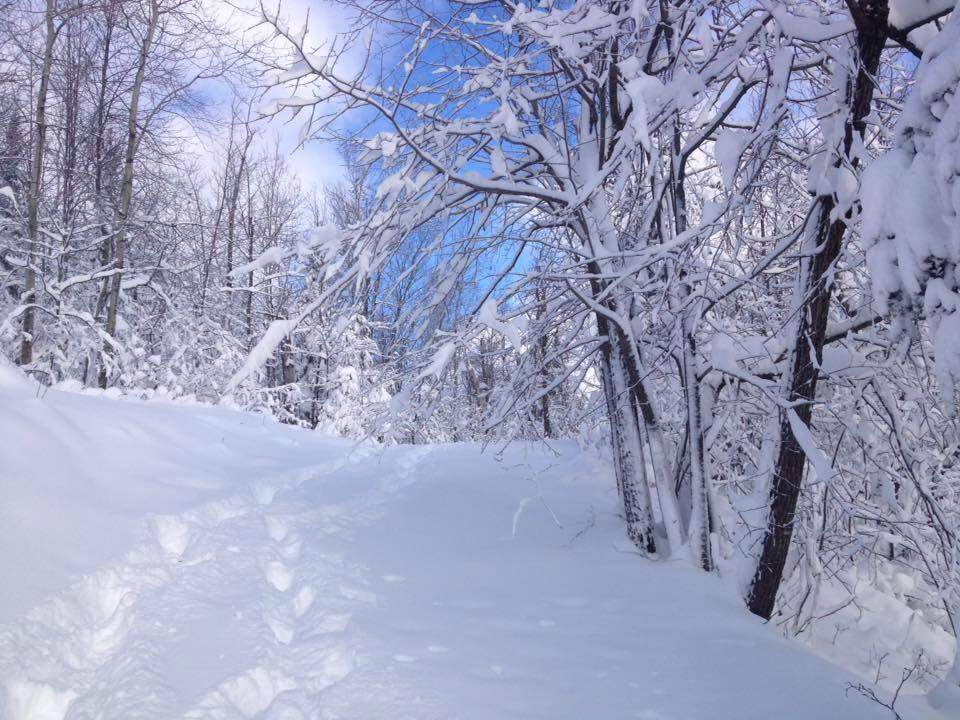 On Friday, Nov. 18, 2016 more than 16 inches of heavy snow fell at MinnesotaBrown World Headquarters in Itasca County, Minnesota. Drifts in some areas topped three feet. So, goes to show you, sometimes them guys is right.(Aaron J. Brown)