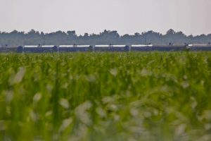North Dakota crude arrives by rail in Louisiana. (PHOTO: Roy Luck, Flickr CC)