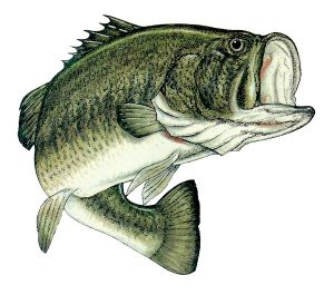 Governor to state: 'I caught you a delicious bass'